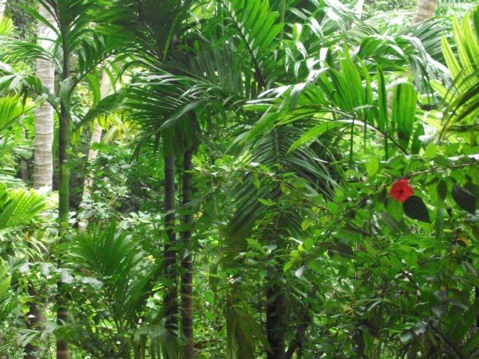 jungle Sri lanka