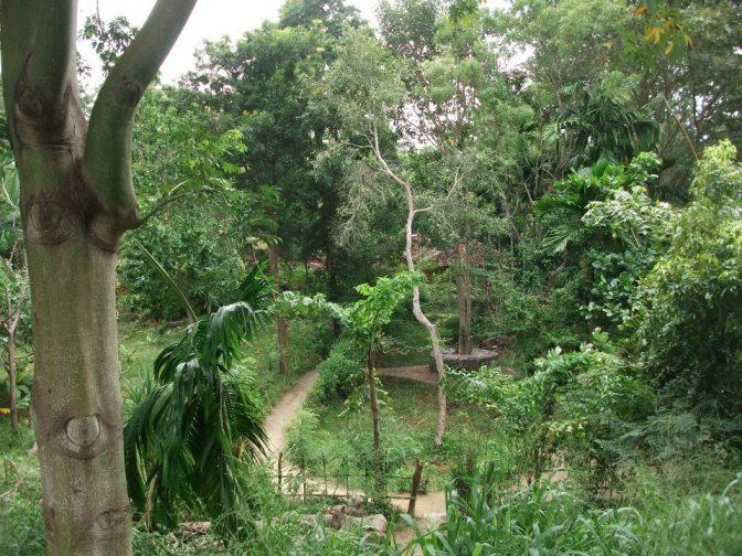 jungle walk ulpotha